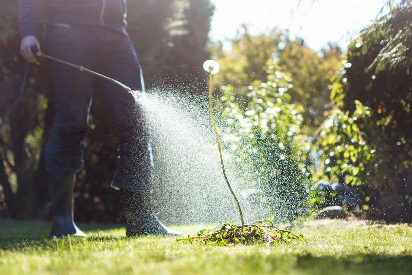 La Duna gardening service
