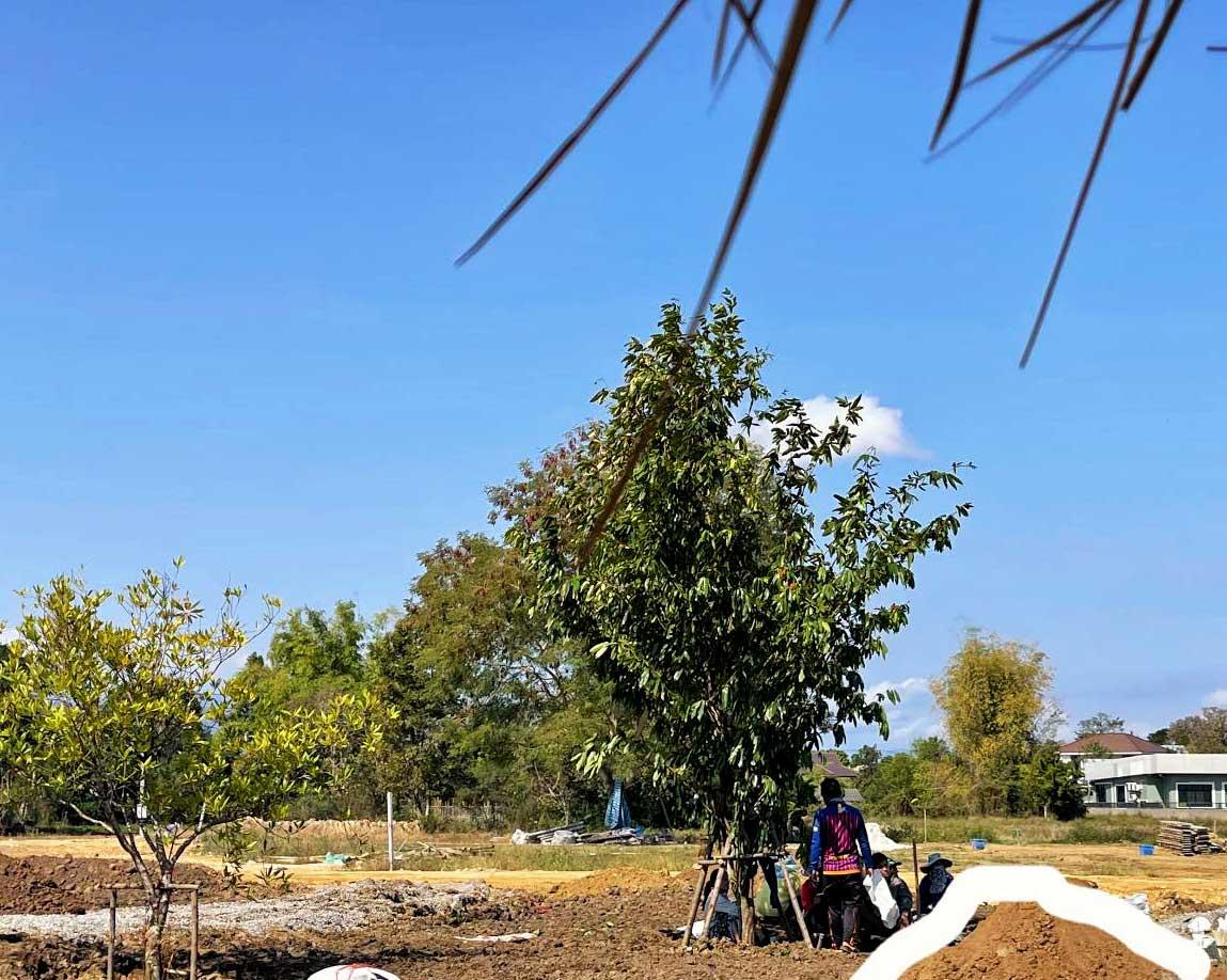 Planting trees at La Duna